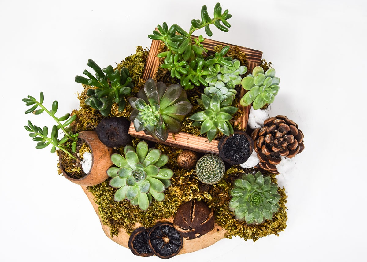 Succulents-on-Board