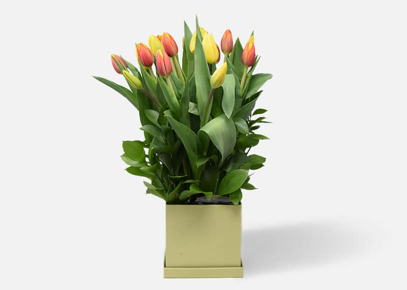 Rainbow Tulip Box