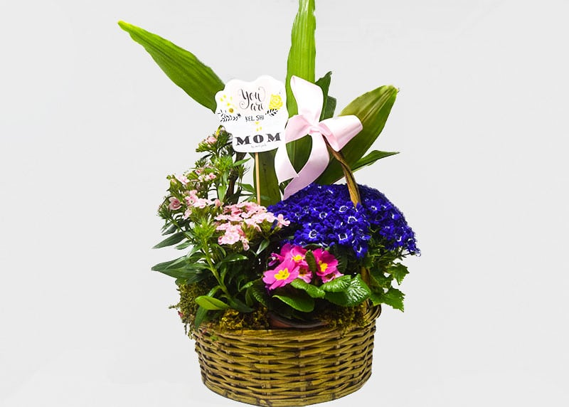 You Are Kil She Mixed Flower Basket for Mom